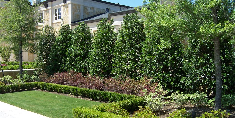 Planting a Privacy Screen - Landscaping Netwo