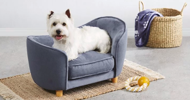 Aldi Releases A Line Of Tiny Dog Sofas And They're Too Adorable .